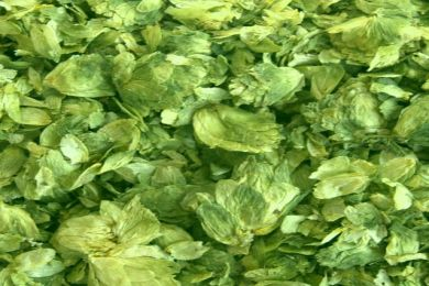 Image of loose hops before vacuum packing